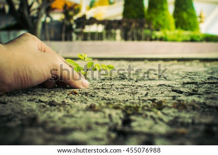 How to plant seedlings growth - stock photo
