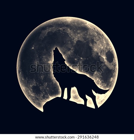 Howling wolf, full moon - stock photo