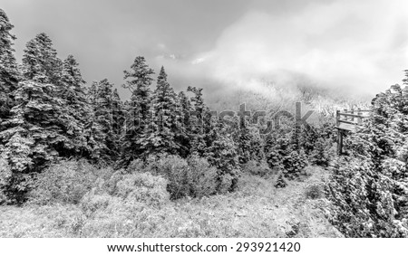 Huanglong National Park near Jiuzhaijou valley after snowfall - SiChuan, China (black and white)  - stock photo