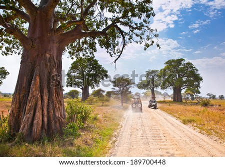 Huge African trees and safari jeeps in Tanzania, Africa. - stock photo