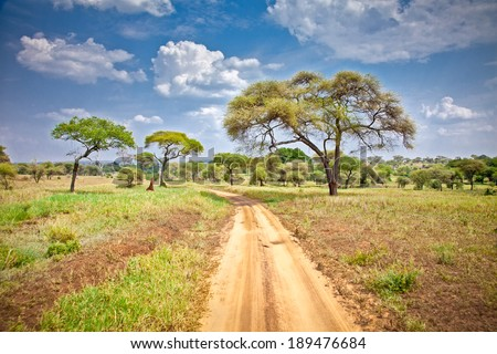 Huge African trees in Tanzania, Africa. - stock photo