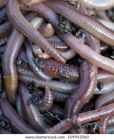 Huge amount of earthworms close to fishing - stock photo