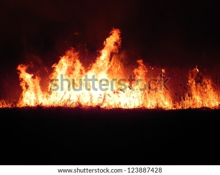 Huge fire in the meadow at night - stock photo