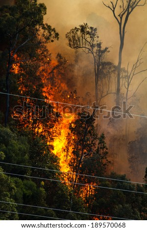 Huge flames from a fire in the bush near electrical power cables - stock photo