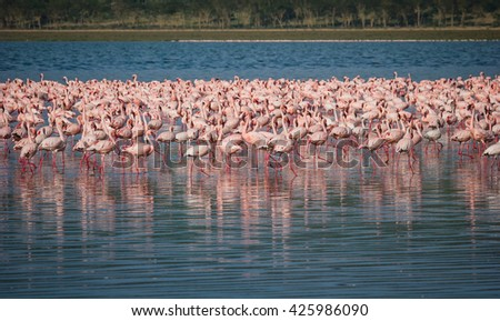 Huge flock of hundreds of flamingos at Lake Nakuru in Africa - stock photo