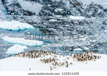 Huge group of penguins in Neko Harbour, Antarctica - stock photo