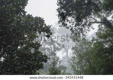 Huge live oaks and dark waxy magnolia trees form a moody canopy on a foggy humid morning in the Deep South USA. Good mortice or background shot. - stock photo