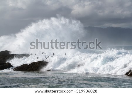 Huge Ocean waves hitting the rocks with flying birds on the north shore of Oahu Hawaii