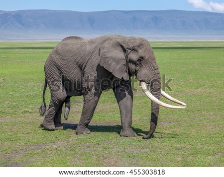 Huge old elephant male in Crater Ngorongoro National Park - Tanzania, Eastern Africa - stock photo