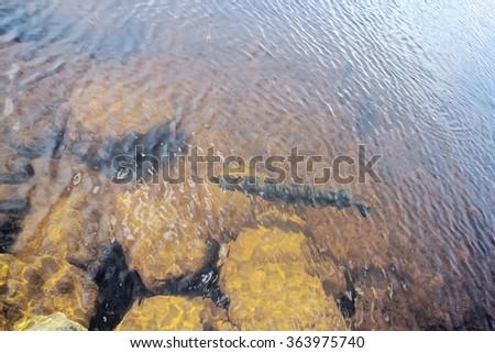 huge pike under water fishing in rocks - stock photo