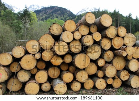 huge pile of logs cut by lumberjack in the Woods - stock photo