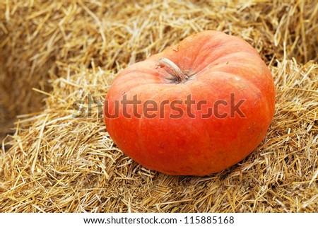 Huge pumpkin in a hay stack - stock photo