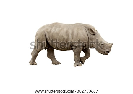 huge rhino (rhinoceros) isolated on white background with clipping path