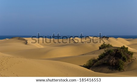 huge sand dunes on the beach of Maspalomas at Gran Canaria