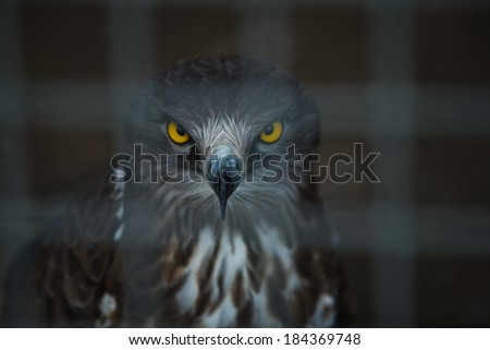 Huge Snake Eagle standing on a cage, Cordoba Zoo, Spain  - stock photo