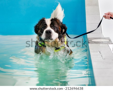 dog swimming pool stock photos images pictures shutterstock