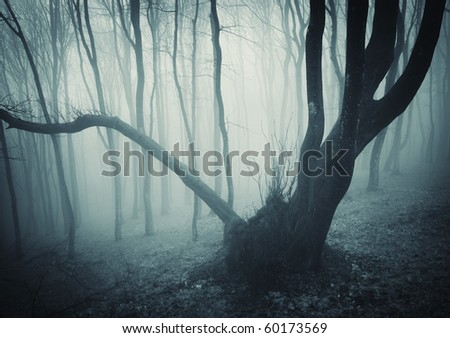 huge tree in a mysterious forest - stock photo