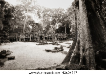 Huge tree trunk at Angkor temple, Angkor, Cambodia, infrared-monochrome image.