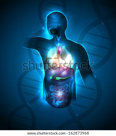 Human anatomy abstract design, DNA chain at the background. Beautiful deep blue color and sparkling lights. - stock photo