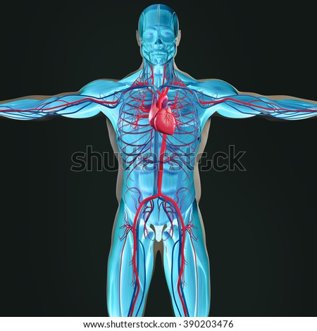 Human Anatomy 3d Futuristic Scan Technology Stock Illustration