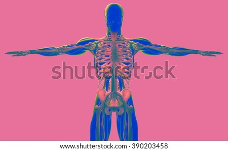 Human anatomy 3D futuristic scan technology with xray-like view of human body. Male torso front. On coral background. Graphic design, art. Vibrant colors.
