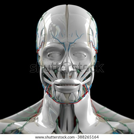 Human anatomy 3D futuristic technology scan. Head and face. Porcelain finish. Biological information.
