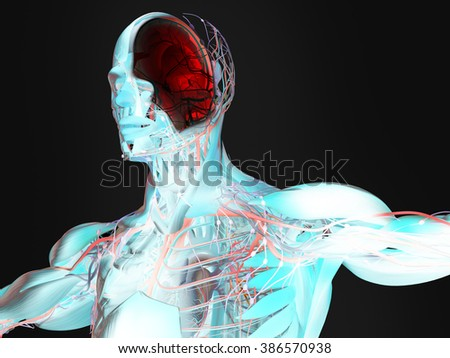 Human anatomy 3D futuristic technology scan.Head cross section showing brain. Xray-like view, brain in red.