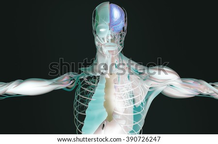 Human anatomy 3D futuristic technology scan. Vibrant colors. Xray-like