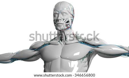Human anatomy face and torso in porcelain finish on plain white background. - stock photo