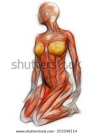 female anatomy stock images, royalty-free images & vectors,