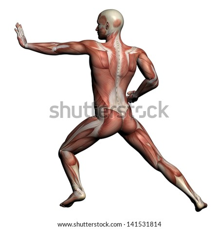 3d digital render running female anatomy stock illustration, Muscles
