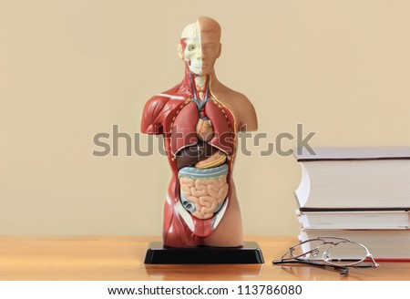 Human anatomy model  ,books and glasses on the table - stock photo