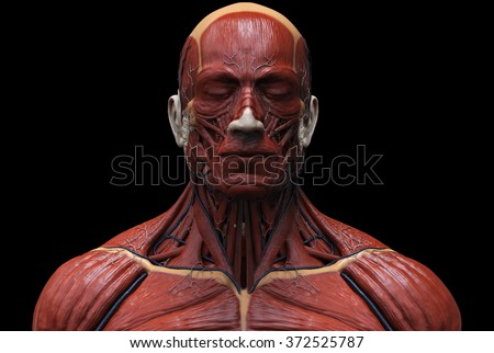 anatomy of the head and neck stock images, royalty-free images, Muscles