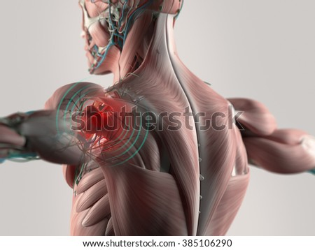 Human anatomy shoulder pain highlighted in red.  - stock photo