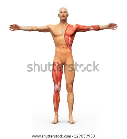 Human Anatomy Showing Muscles Underneath Skin Stock Illustration