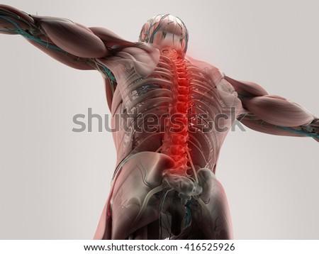 Human Anatomy Spine Back Pain 3 D Stock Illustration 416525926 ...