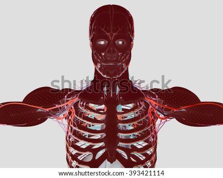 Human anatomy wire frame mesh futuristic scan vivid colors. Body construction sci-fi interface.  - stock photo