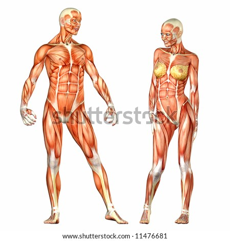 Human Body Anatomy - Man and Woman