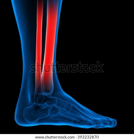 Human Body Bone Joint Pains (Foot joints and Bones)