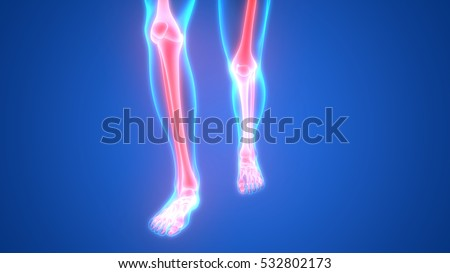 Human body bone joint pains foot stock illustration 532802173 human body bone joint pains foot joints and bones 3d ccuart Image collections