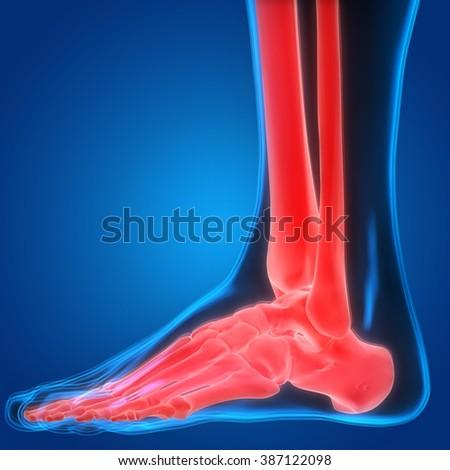 Human Body Bone Pains (Leg Joints) - stock photo
