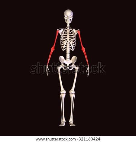 human body pains - stock photo