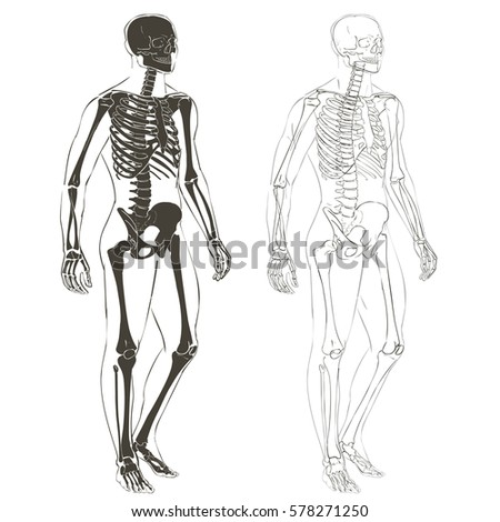 Human body parts skeletal man anatomy em ilustrao stock 578271250 human body parts skeletal man anatomy illustration isolated ccuart Image collections