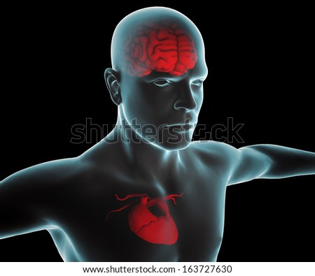 Human body with heart and brain x-ray - stock photo