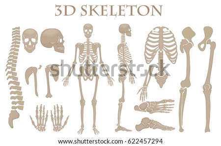human bones stock images, royalty-free images & vectors | shutterstock, Human body
