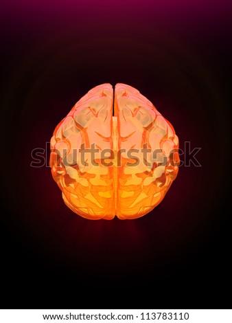human brain - stock photo
