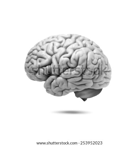 human brain and white background