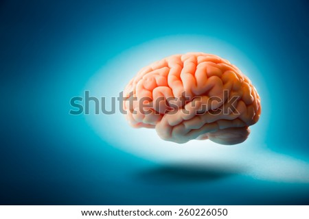Human brain floating on a blue background / Selective focus - stock photo