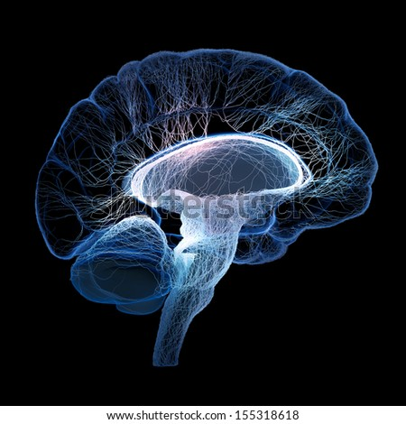 Human brain illustrated with interconnected small nerves - 3d render - stock photo