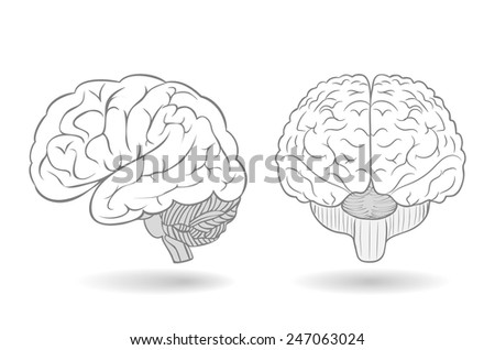 Human brain in two perspectives as an isolated illustration - stock photo